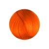 Herman's Amazing - Tara Tangerine