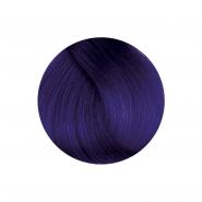 Herman's Amazing - Patsy Purple
